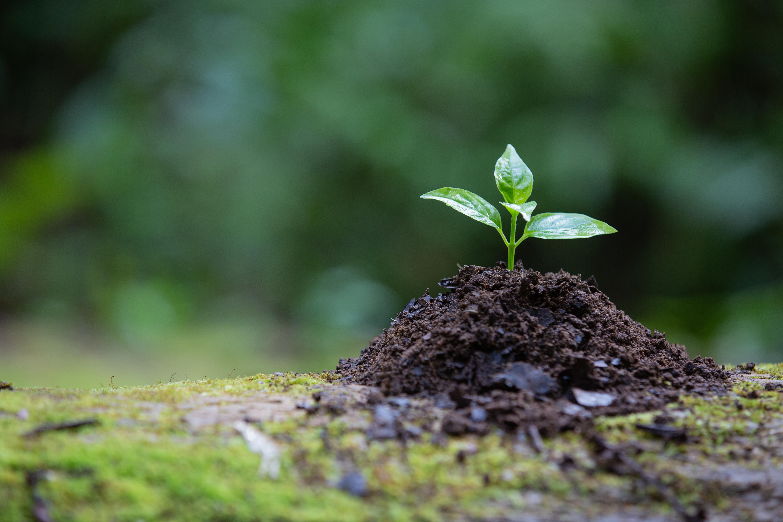ganhar dinheiro preservando a natureza