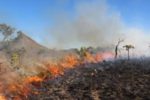 Vegetação pegando fogo no cerrado