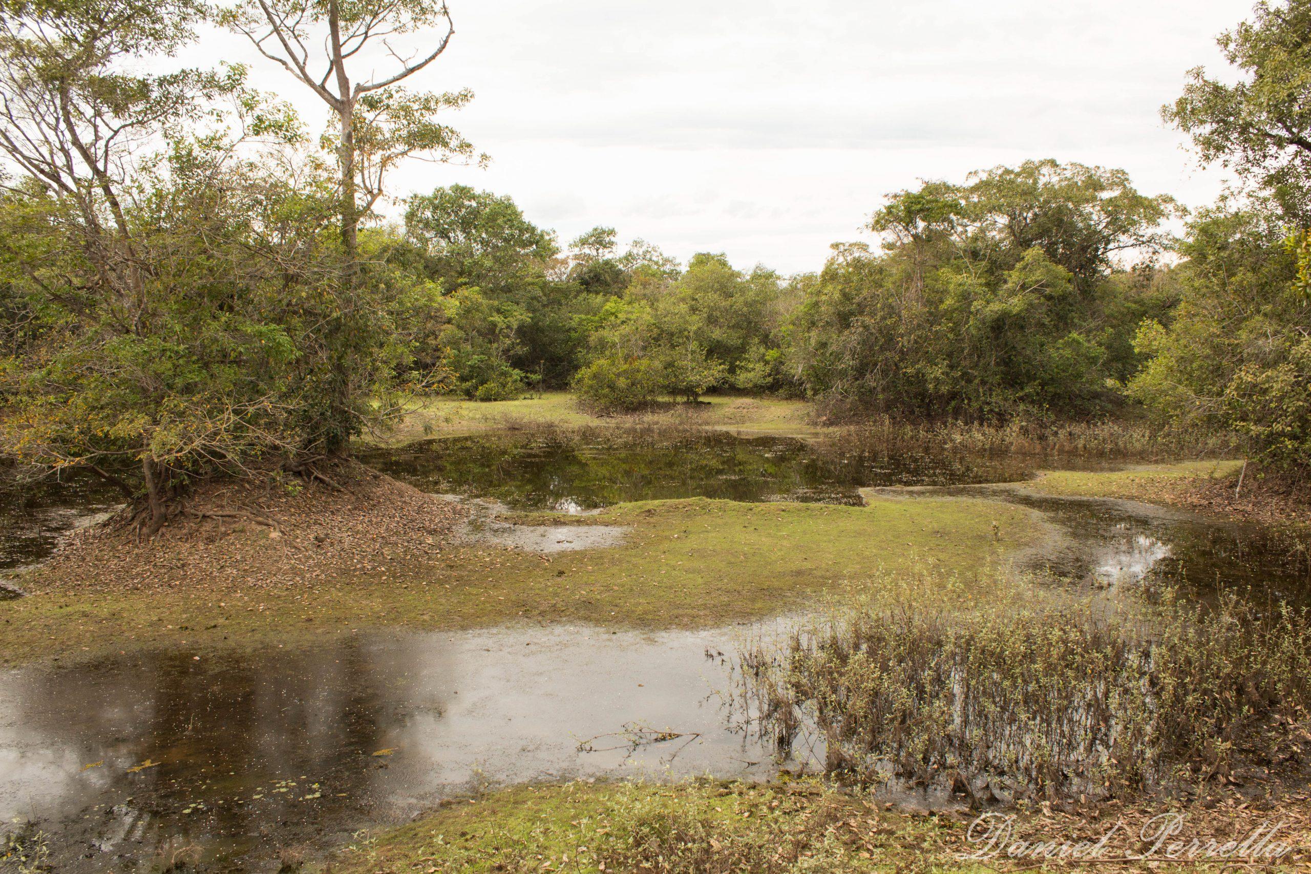 Pantanal secando