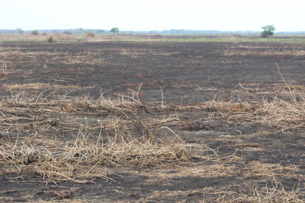 Área queimada no pantanal