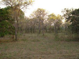 Vegetação do Pantanal